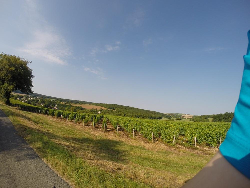 Etape 6: Champs de vigne